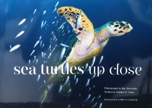 Sea-Turtles-Up-Close-Pic-1
