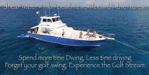 palm-beach-liveaboard---gulfstream