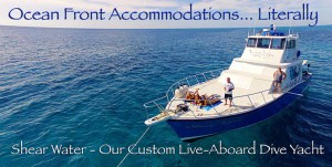 palm-beach-liveaboard---oceanfront
