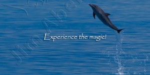 Dol-Leaping-Spotted-Exp-Magicv02