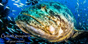 FL-Grouper-Year-Round-v02