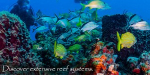 FL-Mixed-Yellow-School-Extensive-Reef-System-v02