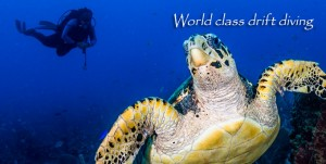 FL-Posing-Turtle-World-Class-Drift-Diving-v02