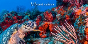 FL-Turtle-Eye-Sponges-Vibrant-Colors-v02
