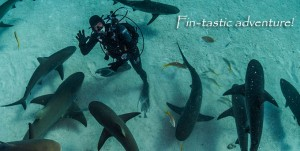 BAHCrew-Member-Sharks-Fintasticv02
