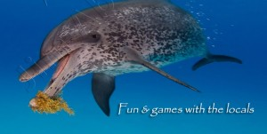 Dol-Fun-and-Games-Dolphin-v02