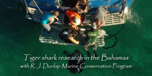 TigerSharkResearchBahamas-v03